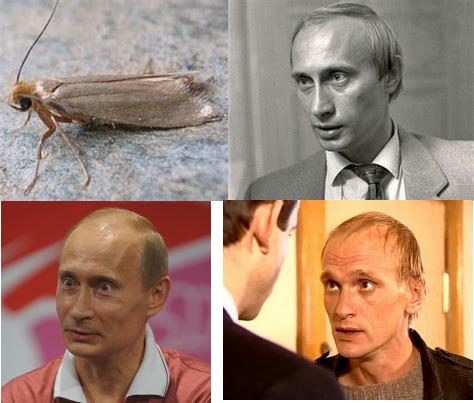 Путин вор. путина в отставку. Хабаровск